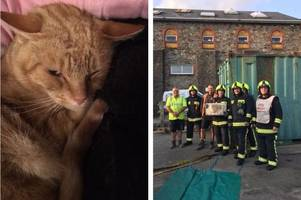 cat with 'possible brain damage' lucky to be alive after falling of a wall