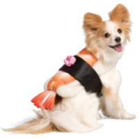 Frightfully Delightful: PetSmart® Unveils New Fall and Halloween Collections