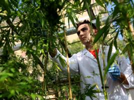 Students can now major in 'medical plant chemistry' — or marijuana — at a Midwestern university