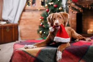 want to book a doggy friendly christmas break?