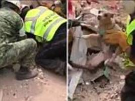 puppy rescued from wreckage of mexico city earthquake