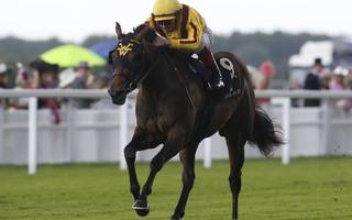 horse racing betting tips: poor forecast a blessing for speedy abbaye hope