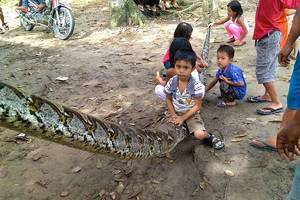 giant python nearly severs man's arm in brutal attack in indonesia