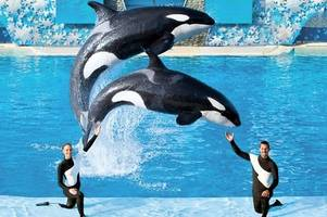 alton towers owner merlin rubbishes seaworld takeover talk