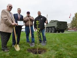 vimy ridge oak sapling now rooted in quinte west