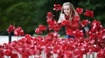 pictured: iconic poppy sculpture weeping window at belfast's ulster museum