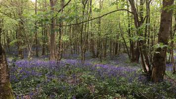 uffmoor wood to reopen to public following 'dogging' claims