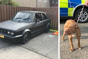 police find bungling 'burglars' and rosco the dog asleep in stolen car in hull street