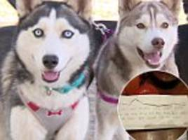 Two huskies are abandoned in California with toys and food