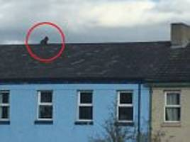 'foul-mouthed' man throwing bricks at police from a roof