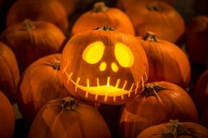 How you can get a free Halloween pumpkin from any supermarket in Cornwall