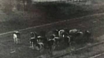cows take midnight stroll on m56 motorway in cheshire
