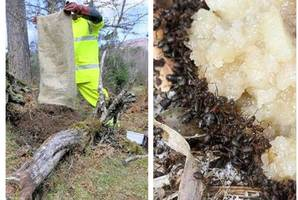 'scotland's largest ever flitting' road crews move 20m ants to their new highland homes