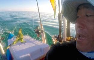 prehistoric-looking critter found 4 miles offshore is saved by kayaker; video