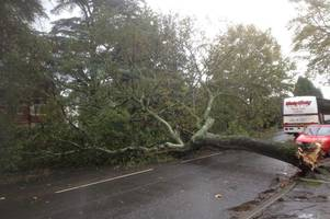 busy cardiff road closed after storm brian brought down a tree