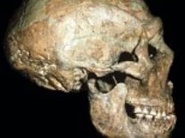 old, injured neanderthal survived with help from friends