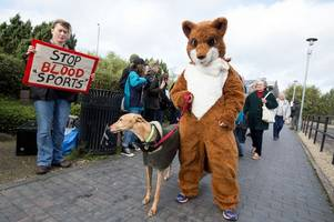 national trust narrowly defeats move to ban trail hunting on its land