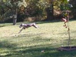 clumsy canine bounds through a park before falling lake