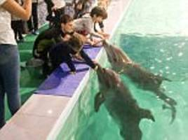 armenian hotel faces backlash for dolphins in basement