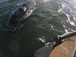 Father films encounter with humpback whale in New Jersey