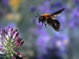 how the sound insects make has been altered by pesticides