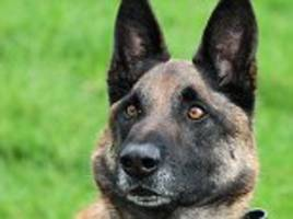 Army dog gets Victoria Cross for service in Afghanistan