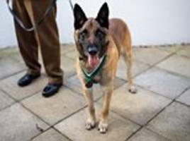 special forces dog is awarded the animal victoria cross