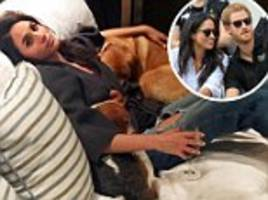 Meghan Markle 'plans to move her dogs to the UK'