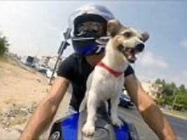 Jack Russell proves he's a real petrol-head in Turkey