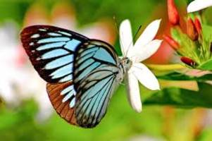 environmentalists record 130 butterfly species during butterfly & biodiversity meet at arunachal's pasighat
