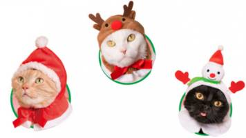 Adorn Your Cat With Adorable Headgear This Christmas
