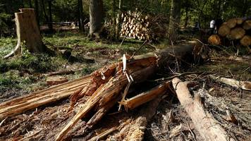Bialowieza forest: EU threatens Poland with fine over logging