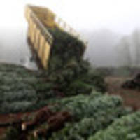 Christmas tree driver lays waste to small German town