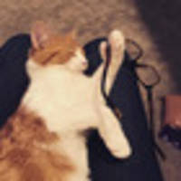 I ran the Paddles the Cat's Twitter account