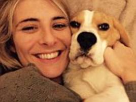 beagle mauled to death by two mastiffs in the park