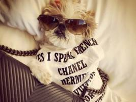 a startup is hiring a 'social petworking coach' to help people make their furry friends instagram stars