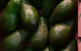 Avocados with no stones are finally on sale at this retailer