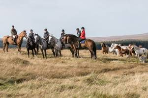 here's your chance to take part in the next dartmoor derby as bookings open for epic 50-mile horse ride