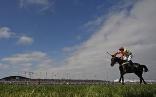 horse racing betting tips: this one might just have enough bite