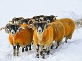 uk weather: amber alert issued for a foot of snow tonight