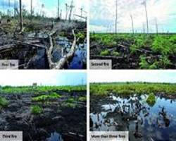 Plan to protect Indonesian peatlands with aerial mapping wins $1m