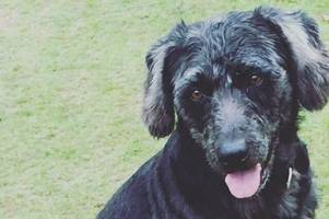 warning to dog owners after beloved devon pet eats poison and dies