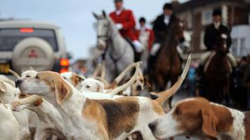 Celebrities back total foxhunting ban in Scotland