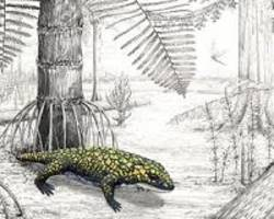 amphibian adapted to varied evolutionary pressures