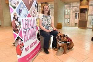larkhall bulldog lands leading role in smash-hit legally blonde the musical