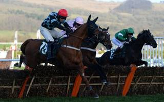 racing tips: tiger could be the one flying up the hill in county hurdle