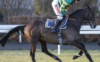 horse racing betting tips:  don't dare oppose buveur in champion