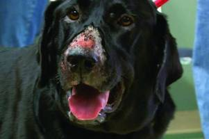 Alabama Rot map shows hot spots for fatal pet disease in Kent and here's what you need to watch out for