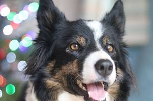 seven diseases or illnesses your dog is at risk from, what to look out for and how to treat them