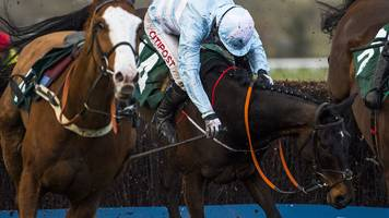 cheltenham festival: bha to carry out review after six horse deaths at event